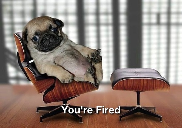 dog-youre-fired